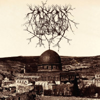 ENTROPY CREATED CONSCIOUSNESS - Impressions of the Morning Star LP